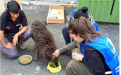 Terremoto - Il cagnolino randagio non vuole andare via