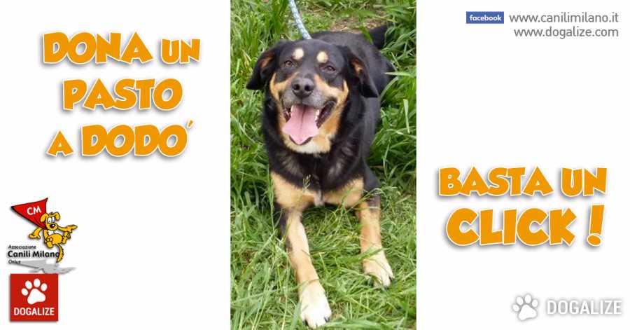 Aiutiamo i cani Abbandonati