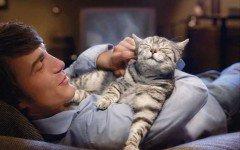 Terremoto - salvata gattina con coda tagliata