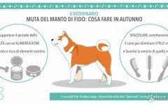 La Muta: la perdita del pelo del cane