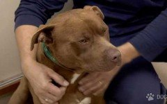 Increible! Municipales ataron a un perro a una camioneta y lo arrastraron por el asfalto