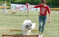 Evento Cinofilo: Raduno Cani Simpatia!