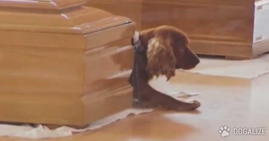 Perro no se separa del ataúd de su dueño