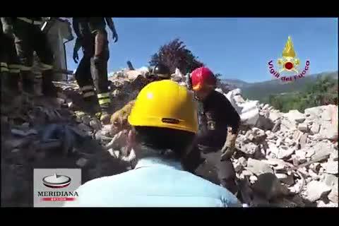 Terremoto - salvato golden retriever in buona salute