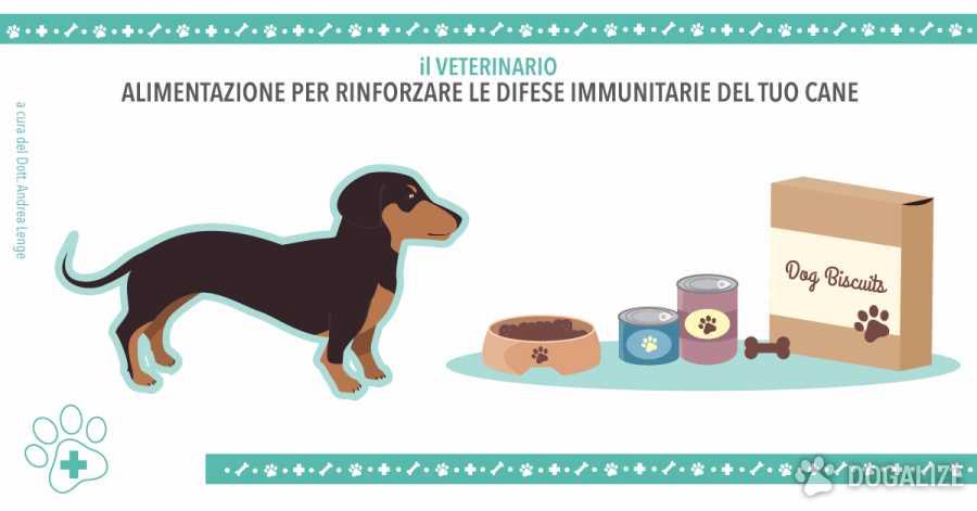 Alimentazione del cane in Autunno difese immunitarie