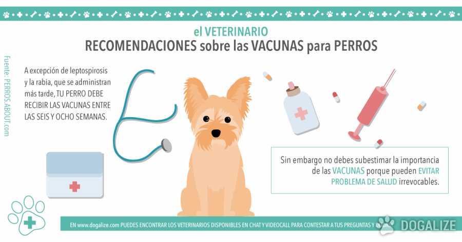 Recomendaciones sobre las vacunas para perros