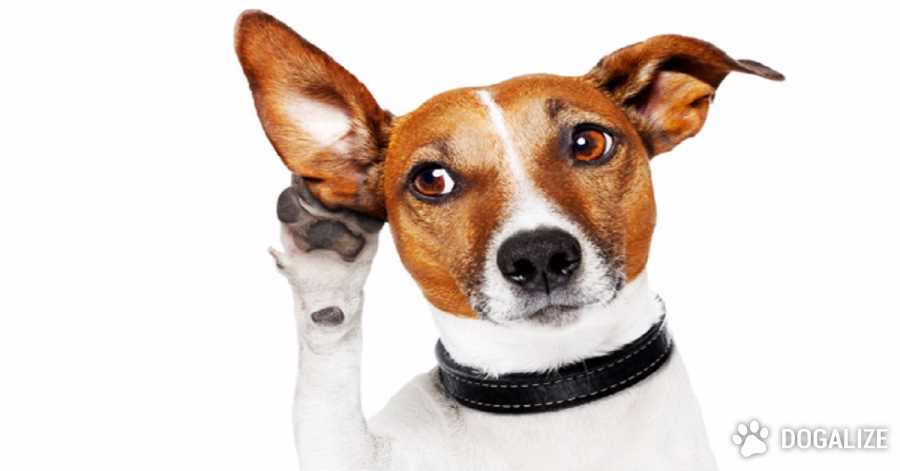 Los perros entienden lo que decimos y cómo lo decimos