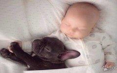 Un bebe y un cachorrito de bulldog francés amigos inseparables