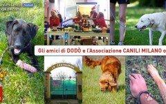 Canili Milano Onlus cani abbandonati