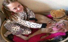 Final feliz para una niña autista y su perro pitbull