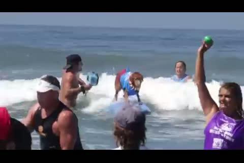 cani fanno surf