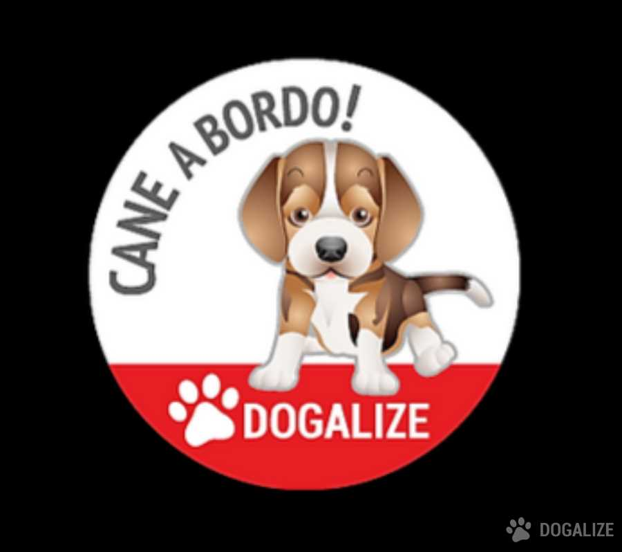 offerte pet shop cane a bordo