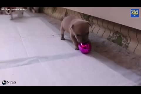 Cucciolo cane adottato famiglia gattini