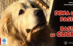 adotta un cane abbandonato