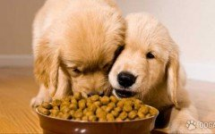 Consigli del veterinario: i cani e cibi dolci