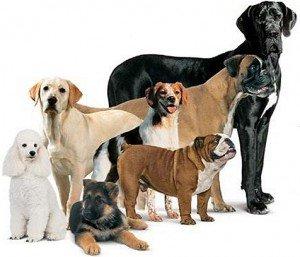 razze allevamento cani