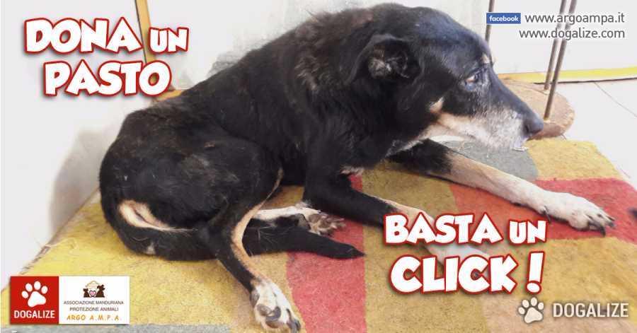 Adozione cani a Distanza: Dona un pasto con un click