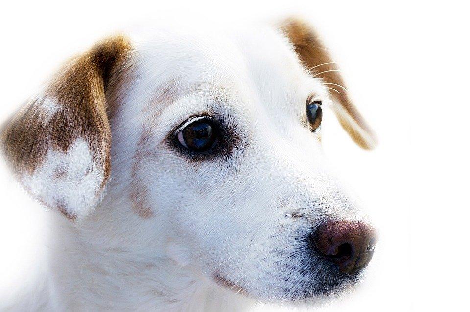 Vacunas para perros: algunas recomendaciones