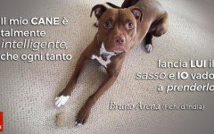 Aforismi per cani: l'opinione di Bruno Arena, dei Fichi d'India, sull'intelligenza dei nostri amici pelosi!