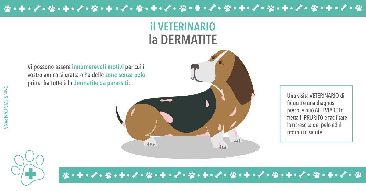 Veterinario: la dermatite allergica da pulci nei cani e gatti, come scoprirla e come trattarla