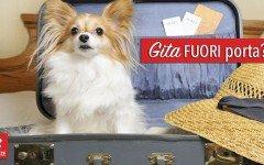 Bed and Breakfast cani ammessi: scegli la tua struttura