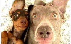 Voi e il vostro cane, modelli per un giorno