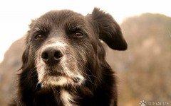 Pensioni per cani: Gli step da seguire per affidarsi alle migliori, ed i nostri consigli!