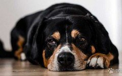 Antinfiammatori per cani: quando e come utilizzarli sui nostri amici animali