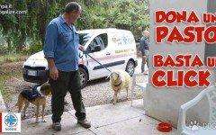 Adotta un animale a distanza: tocca a Pasqualino!