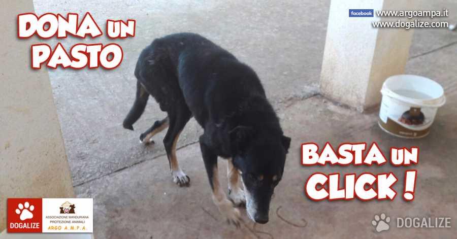 Cani in adozione: Dona un pasto con un click
