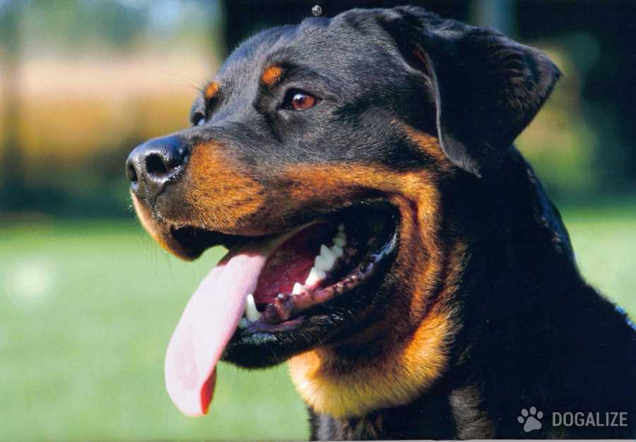 Consigli legali e cani: i danni provocati dal cucciolo