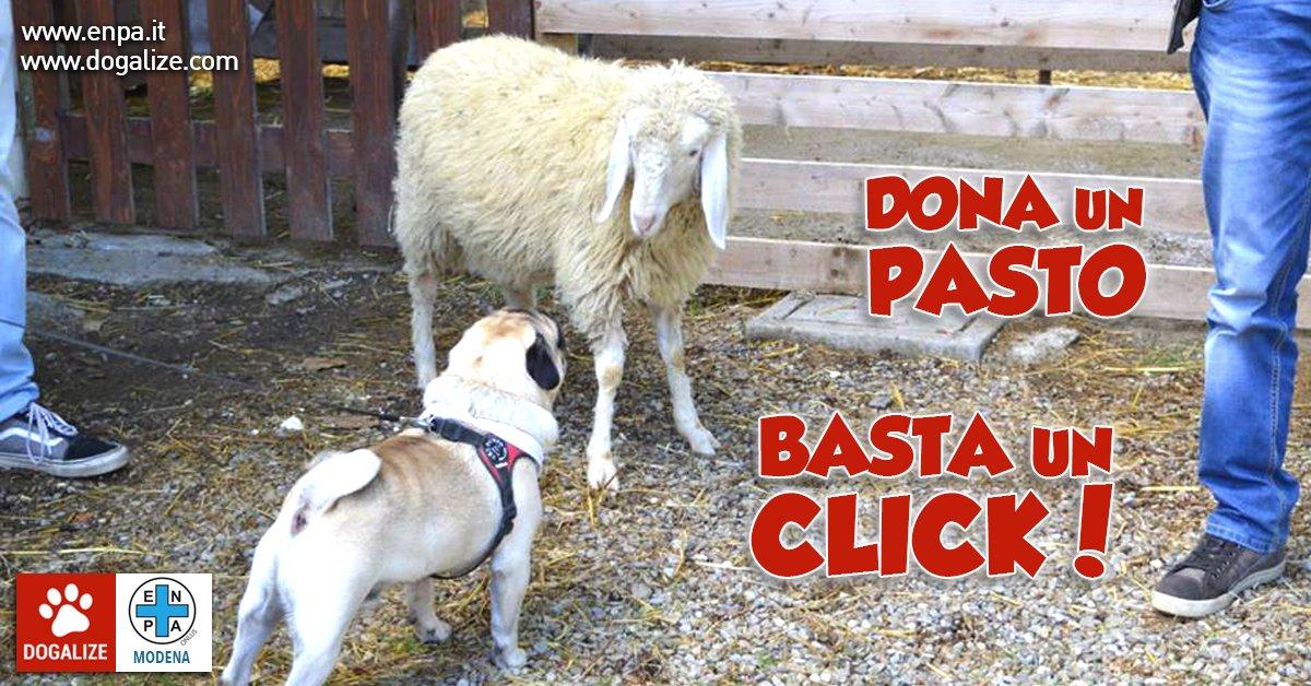 adotta-un-animale-a-distanza-dona-un-pasto-con-un-click