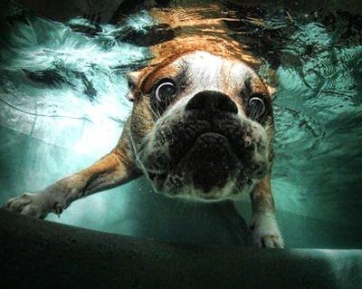 Come lavare il cane: i consigli fai da te per il tuo cucciolo