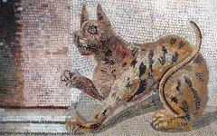 Le origini del gatto: le caratteristiche della specie felina