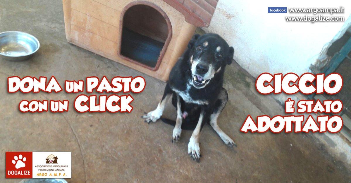 ciccio_argo_adottato
