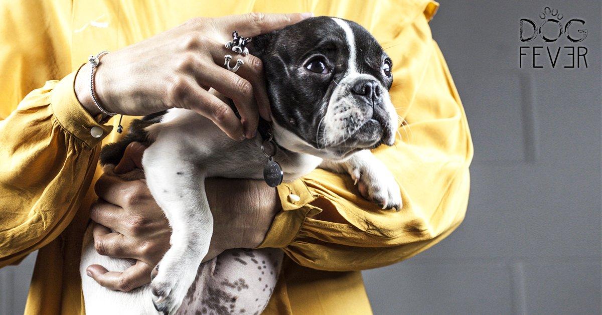 Dog Fever, quando puoi indossare un'emozione; il tuo amore peloso come gioiello! Scopri su Dogalize l'esclusiva linea di gioielli canini!