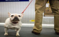dogs-and-cats-can-travel-by-metro-in-buenos-aires