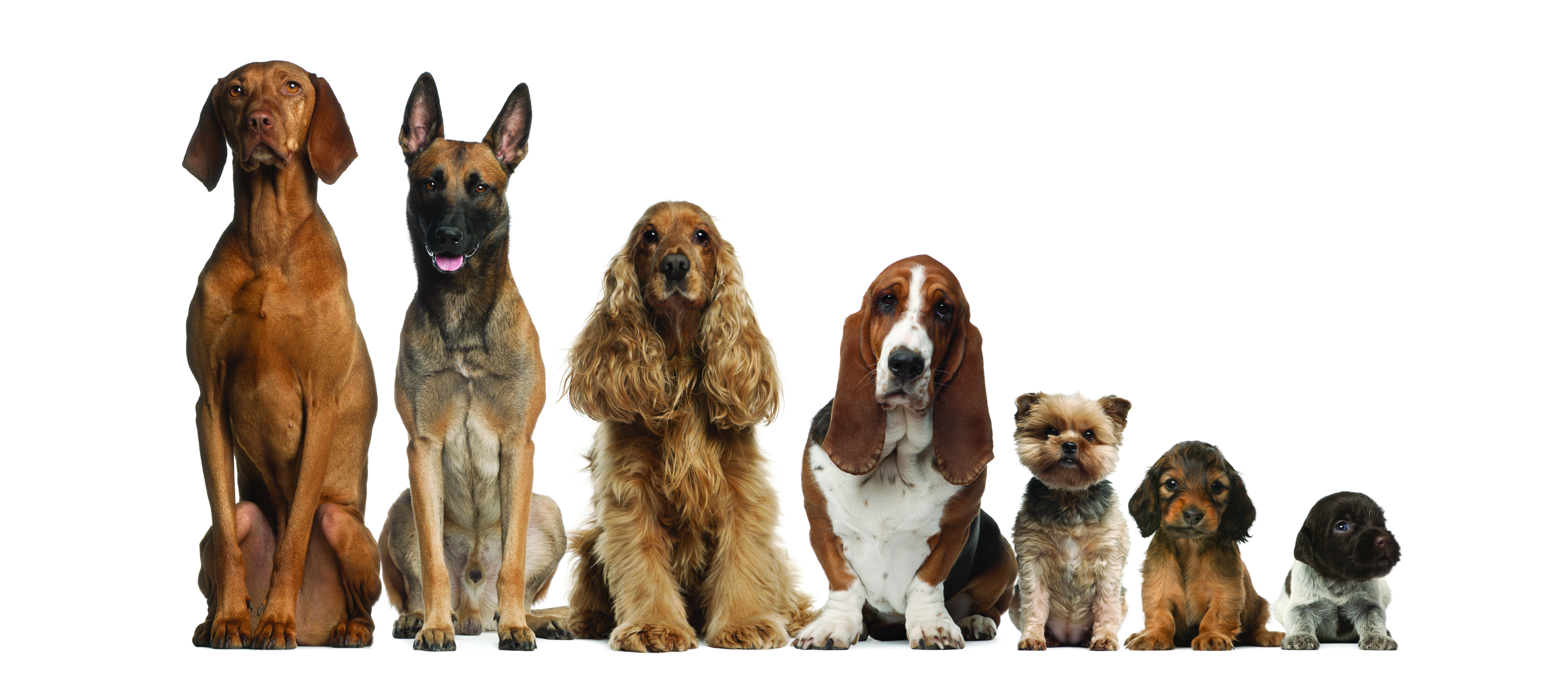 Razze di cani