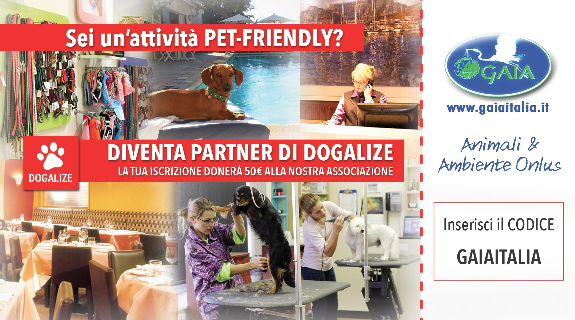 gaia-animali-ambiente-aiutaci-ad-aiutare-associazione-per-animali