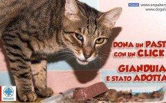 Adozione avvenuta: Gianduia, Gattile Enpa Bergamo