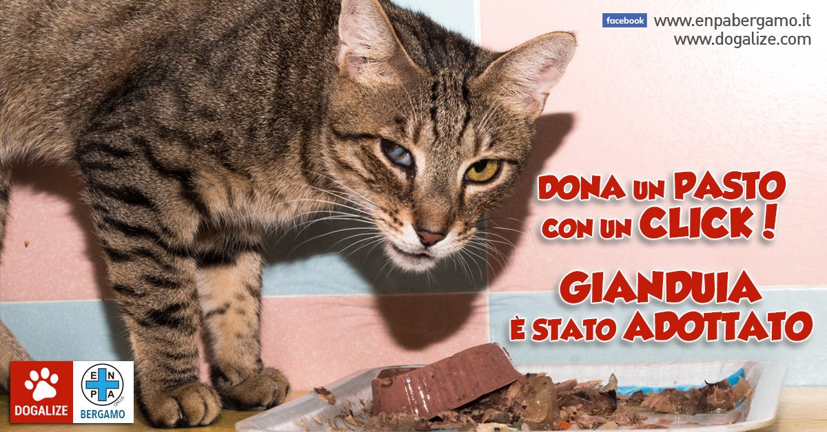 gianduia-adottato-gatto-gattile-enpa-bergamo