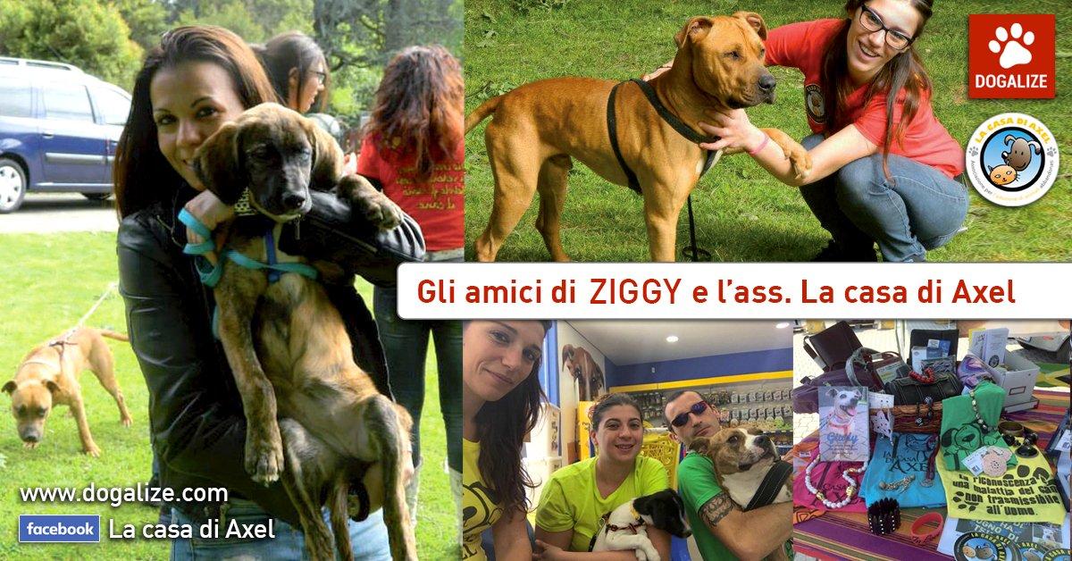 grazie-alle-vostre-iscrizioni-e-condivisioni-potremo-aiutare-ziggy-e-lassociazione-italiana-la-casa-di-axel-dona-un-pasto