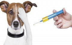 keep-up-with-your-dog-vaccinations-disease