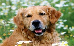 Kidney stones in the urinary system in Dogs and Cats