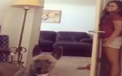 Niko-video-del-perro-que-juega.-video-de-perros-y-gatos.jpeg