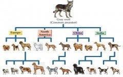 Cane da compagnia cani cane