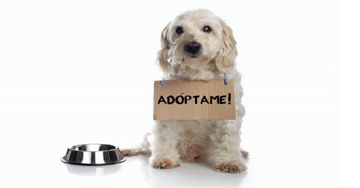 adoptar un perro perros-en-adopcion