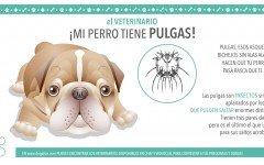 pulgas-garrapatas-consejos-veterinarios-antipulgas-para-perro