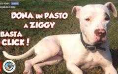ziggy-lacasadiaxel-ospite-dellassociazione-italiana-adottiamo-a-ditanza