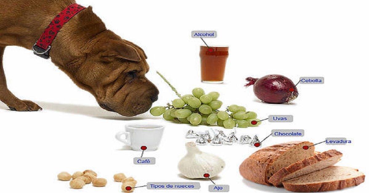 alimentos-toxicos-perro-mascota